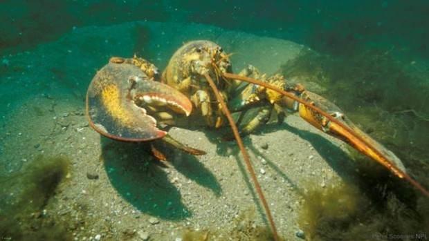 آشنایی با جاندارانی که هرگز نمیمیرند + عکس