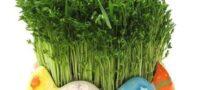 آموزش ساخت زیباترین سبزه ها ویژه نوروز 99