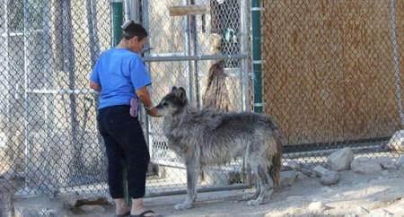 عاشقانه زندگی کردن پیرزنی با گرگ (عکس)