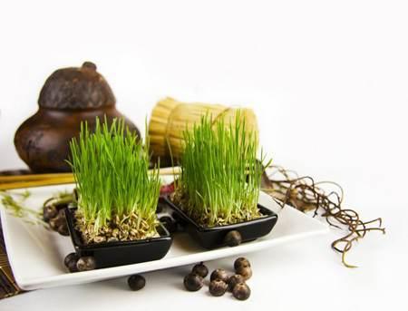 آموزش ساخت زیباترین سبزه ها ویژه نوروز96