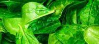 معرفی سالم ترین خوراکی های پروتئین و حاوی گیاه