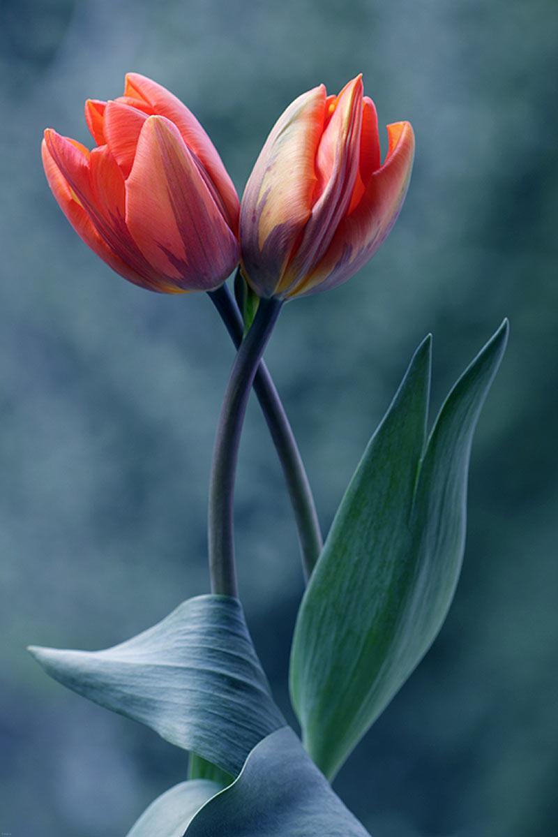 شدن در زایمان طبیعی تصاویر بسیار زیبا از گل های طبیعی
