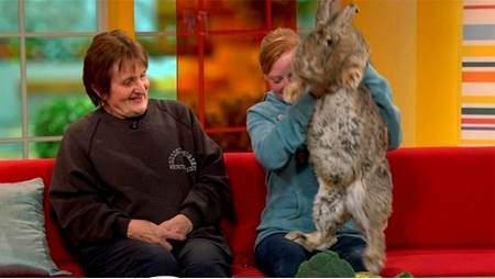 معرفی بزرگترین حیوانات اهلی و خانگی در دنیا