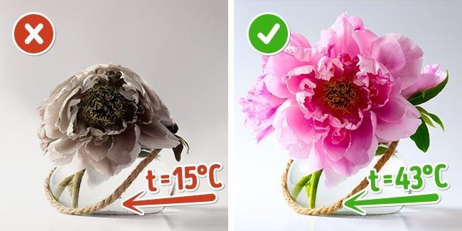 راهکاری های کاربردی برای نگهداری گل ها در عید