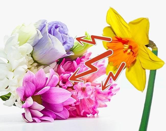 ایده های مناسب برای نو کردن گل های طبیعی خانه