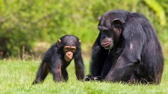 گزارشی جالب از حیوانات ارزشمند اهلی و خانگی جهان