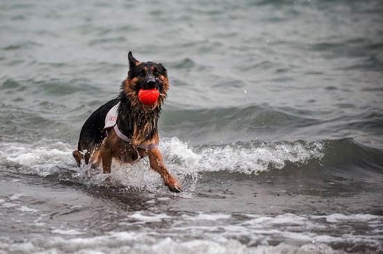 آشنایی با سگ های نجات دهنده انسان ها