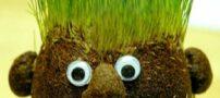 آموزش کاشت سبزه به شکل آدمک در داخل جوراب