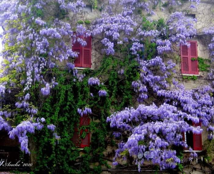 تصاویر دیدنی از زیبا ترین باغچه های جهان