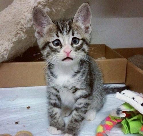 تصاویری از گربه ی جالب با چشمان زیبا