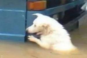 حرکت جالب این سگ و کمک کردن به صاحبش (عکس)
