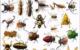 روش های کاربردی برای از بین رفتن حشرات در خانه