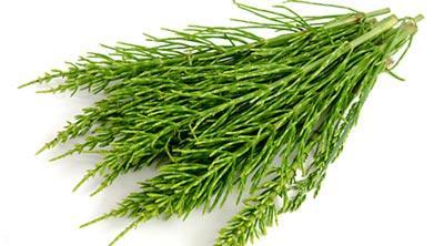 خاصیت گیاه دم اسبی مخصوص تقویت استخوان