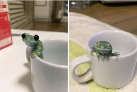 سری جدید تصاویر خنده دار از شیطونی های حیوانات