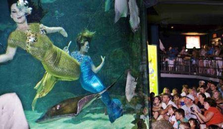 سرگرمی با رقص های پری دریایی (عکس)