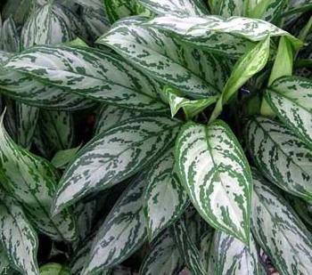 معرفی گل و گیاهانی که منزل شما را جذاب میکند