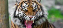 افراد مشهوری که توسط حیوانات وحشی زنده زنده خورده شدند (+تصاویر)