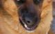 خطرات نگهداری سگ خانگی در کنار کودک