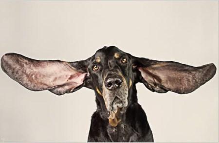 رکوردهای جالب و عجیبی حیوانات در کتاب گینس