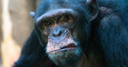 10 حادثه عجیب خورده شدن انسان ها توسط حیوانات