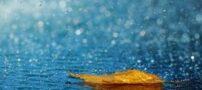 همه چیز در مورد باران اسیدی