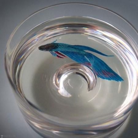 عکس دیدنی از هنر نقاشی سه بعدی بر روی ظرف پر از آب