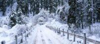 چرا در هنگام برف سکوت بر قرار میشود ؟