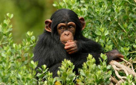 شباهت های جالب و دیدنی انسان و حیوانات