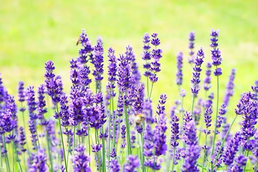 تاثیرات مثبت گل ها و گیاهان مشهور بر سلامت افراد