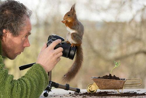 ژست های جالب از سنجاب در مقابل دوربین
