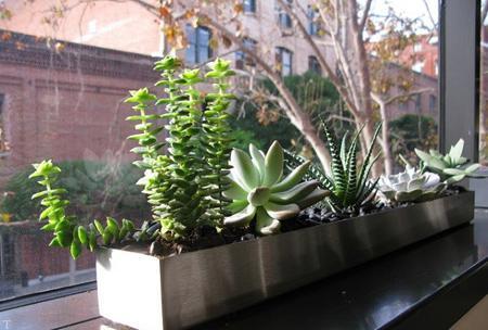 شناخت کامل گیاهان خانگی آفتاب دوست