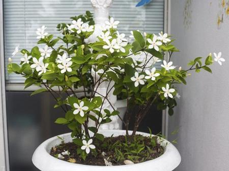 معرفی گیاهانی برای تصفیه هوای منزل