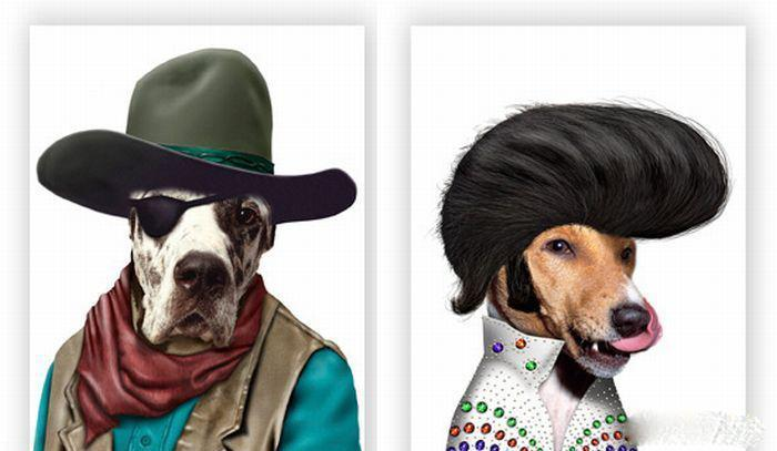 گالری عکس های حیوانات به جای افراد معروف دنیا