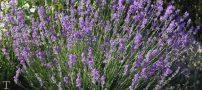 معرفی گیاهانی برای تصفیه هوایی منزل
