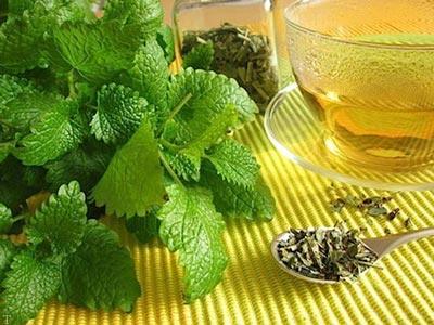 5 مورد از بهترین گیاهان دارویی برای تسکین اعصاب و محافظت از بدن