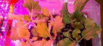 کاشت گل و گیاه در فضا