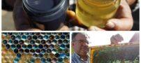 تولید عسل آبی توسط زنبورهای عسل فرانسوی (عکس)