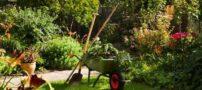 شیوه صحیح نگهداری از باغچه
