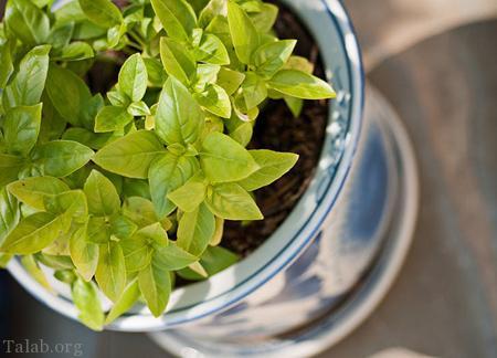 گیاهانی برای تسکین اعصاب و آرامش بخش