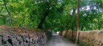 سر و صداهای وحشتناک در جنگل سر برج مشهد