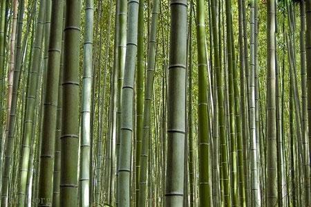 جنگل دیدنی و دارای صداهای آرامش بخش در ژاپن