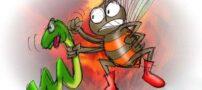 داستان «نیش مار و زنبور»