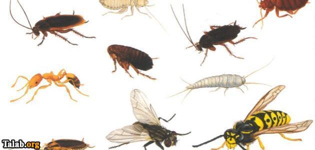 چگونه حشرات را از خانه و خودمان دور کنیم ؟