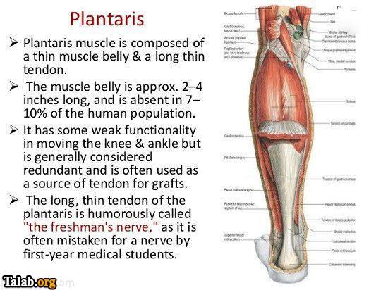 معرفی اندام های بدن که نیازی به آن ها نیست