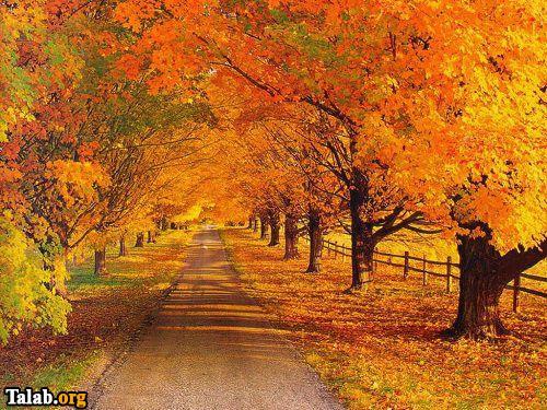 پیامک های خواندنی در مورد فصل پاییز
