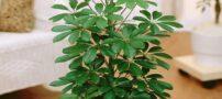 آشنایی با 9 گیاه آپارتمانی و مفید برای سلامت