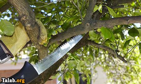 چگونه در خانه درخت قطع کنیم که مشکلی نداشته باشد ؟