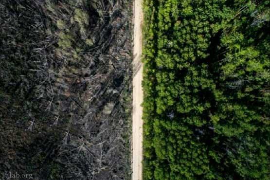 جاده ای که باعث شد جنگل از بین نرود (+عکس)