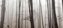 آشنایی با جنگل زیبای راش در سواد کوه