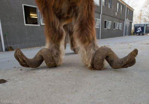 اسب عجیبی که در پاهایش شاخ گوزن دارد (+تصاویر)